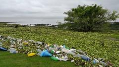 El da despus de la sudestada (7sombreros) Tags: basura ecologa sanisidro contaminacin rodelaplata camalotes sudestada costanortedebuenosaires