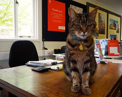 Cat, Ightham Mote, Kent (Brownie Bear) Tags: uk england kent britain united great kingdom gb moat item ightham mote
