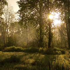 Apparelled in Celestial Light (chris.ph) Tags: morning trees light mist spring meadow calm fortlangley wordsworth