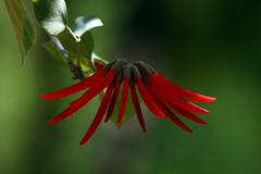 IMG_6846 (scottygphotos) Tags: color nature canon photography colorful flickr explore doublefantasy amazingnature macrolife