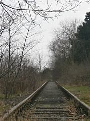 Reste Gterstrecke Teltow 2016 - 32 (Abandoned-Stillgelegt Berlin) Tags: railroad trees tree abandoned train germany deutschland bush track tracks railway bushes bume brandenburg baum gleise busch ballast gleis bahnstrecke stillgelegt trackbed teltow bahndamm schotter schwellen bsche b landbrandenburg betonschwellen bahnbergnge holzschwellen betonschwelle holzschwelle altebahnstrecke gterstrecke stadtteltow ehemaligegterstrecke ehemaligebahnstrecke