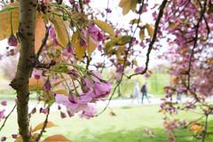 among the flowers (.) Tags: berlin primavera lens spring nikon tokina der frhling welt marzahn grten hellersdorf grtenderwelt d7100 1116mm