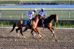"2016-01-03 (96) r9 Caitlyn Stoddard on #5 Tough Weather (JLeeFleenor) Tags: photos photography md marylandracing marylandhorseracing laurelpark jockey جُوكِي ""赛马骑师"" jinete ""競馬騎手"" dżokej jocheu คนขี่ม้าแข่ง jóquei žokej kilparatsastaja rennreiter fantino ""경마 기수"" жокей jokey người horses thoroughbreds equine equestrian cheval cavalo cavallo cavall caballo pferd paard perd hevonen hest hestur cal kon konj beygir capall ceffyl cuddy yarraman faras alogo soos kuda uma pfeerd koin حصان кон 马 häst άλογο סוס घोड़ा 馬 koń лошадь femaleathletes femalejockey chestnut maryland"