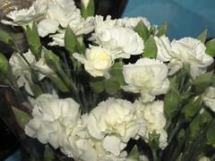 Ramo de clavelines blancos  (Xic Eseyosoyese (Juan Antonio)) Tags: verde blanco mxico canon de is y o para amor powershot un bla ramo blancas 170 blancos sx dificil florecitas imposible clavelines