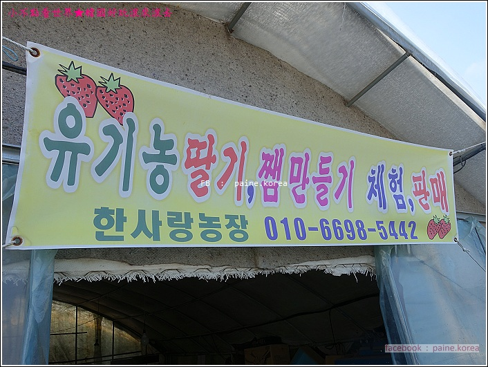 草莓園採草莓 (4).JPG