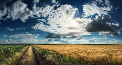 Wealthy vastness (Radisa Zivkovic) Tags: road blue red summer sky panorama cloud sun sunlight plant green industry nature field yellow rural season landscape leaf corn scenery path farm wheat wide cereal vegetable crop organic agriculture sunbeam vastness cultivated