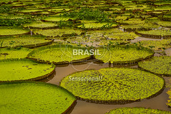 NO_Manaus0420 (Visit Brasil) Tags: travel brazil tourism horizontal brasil amazon rainforest natureza vitriargia manaus norte amazonas detalhe ecoturismo externa semgente diurna riosolimes visitbrasil