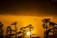 35#365 Orange (Fabio75Photo) Tags: sunset sky orange black alberi tramonto ombre cielo sole nero arancio