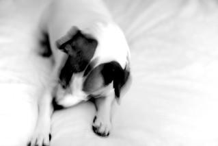 canine sabotage ( 4 / 366)