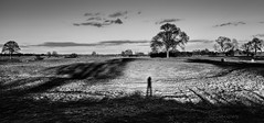 Tales from the English countryside IV (Frank Busch) Tags: greatbritain light blackandwhite bw sunlight tree monochrome field grass fence evening countryside blackwhite shadows farm meadow eveninglight barnsdale longshadows frankbusch wwwfrankbuschname photobyfrankbusch frankbuschphotography imagebyfrankbusch wwwfrankbuschphoto