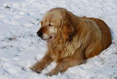 Bennu (Sareni) Tags: light shadow dog snow animal serbia january sm pas ker vojvodina twop srbija sneg banat 2016 senka svetlost benu alibunar juznibanat sareni savemuncana