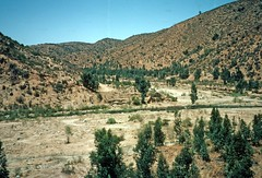 Canyon viewed from train, Paso Hondo (1991) (Duncan_and_Gladys) Tags: chile cl quilpue valparaisoregionv