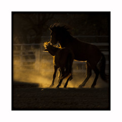 Phantom Dance (AnotherCalifornia) Tags: california ranch sunset horses abstract animals silhouette dusk mating dust fighting impressionist lakesherwood