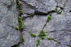 (foggybummer (Keith)) Tags: abstract rock moss environment damp crevice