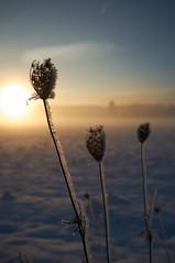 Winterland (stefandinkel) Tags: fuji blume eis landschaft x100 gegenlichtaufnahmen stefandinkel