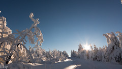 Winters Day (holgileinchen) Tags: schnee trees winter sunset sun snow nature beautiful germany lights licht amazing natur sunny bume erzgebirge oremountains fichtelberg