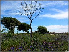 Bellavista-Huelva (Spain) (sky_hlv) Tags: espaa andaluca spain europa europe village pueblo huelva bellavista costadelaluz urbanizacin aljaraque