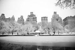 Central Park Snow (Rebecca Schear) Tags: nyc newyorkcity winter blackandwhite snow reflection canon pond centralpark fifthavenue bethesdafountain modelboatpond canon6d