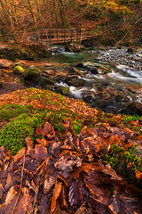 Colours Of Ambleside (aevo69) Tags: bridge autumn brown sun green fall andy water leaves season walking outdoors foot evans spring stream long exposure sunny falling andyevanscreations