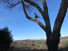 Big Blue Songbird (amyboemig) Tags: sculpture bird dogs birdie vermont outdoor vt songbird dogmountain stephenhuneck saintjohnsbury