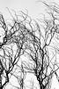 takken_24597531540_o (Wout van Mullem) Tags: silhouette highkey van wout takken tegenlicht mullem fotovakschool openkader