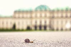 Slowly (C_MC_FL) Tags: vienna wien building animal architecture canon photography eos austria sterreich focus fotografie dof slow perspective snail ground palace depthoffield architektur belvedere asphalt tamron schnecke gebude tier perspektive schrfentiefe fokus tiefenschrfe langsam schlos 18270 60d b008