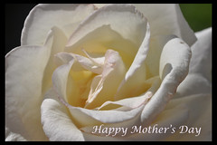 happy mothers day card (Silicon/e) Tags: new white flower macro rose wonderful happy spring bestof day vivid best full mothers card bloom blooming