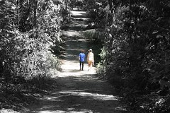 Walking away (Luis Eduardo ) Tags: park people nature forest way path national desaturated luismosquera