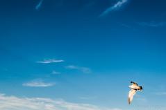 Flying Bird (MH Enterprises) Tags: life nightphotography ohio wild portrait blackandwhite black nature monochrome beautiful beauty birds silhouette dark stars nikon foto photographer photographie darkness background photographers nighttime photographs photograph pictureoftheday youngstown picoftheday lif nikon5000 wildelife outdoorphotography d5000 allshots photographylovers nikond5000 vscocamphoto photographysouls topliketags
