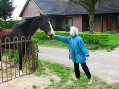 IMG_0919 (streamer020nl) Tags: horse cheval louise pferd limburg paard 2016 zuidlimburg slenaken 220416