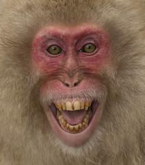 Japan (richard.mcmanus.) Tags: smile animal japan wildlife gettyimages macaques honshu japanesemacaque snowmonkeys