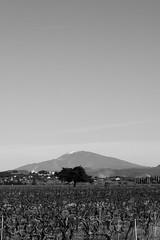 Mont Ventoux (Alexandre_SL) Tags: hiver paysage vigne ventoux