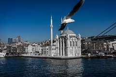 Mosque by the ocean (Syahrel Azha Hashim) Tags: ocean city travel light vacation holiday detail building bird birds architecture 35mm buildings turkey prime fly flying inflight wings colorful dof view getaway seagull sony details scenic naturallight bluesky istanbul mosque handheld shallow moment simple touristattraction clearsky dense a7ii sonya7 syahrel ilce7m2