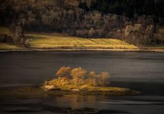 Loch Leven (Roksoff) Tags: trees sea water misty fog pine landscape island scotland forestry larch eilean fortwilliam ballachulish lochaber coran lochlinnhe scottishhighlands lochleven onich 70200mmf28 munde leefilters nikond810 coranferry