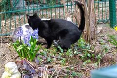 Casimir Chasing Nelli (frankbehrens) Tags: cats tom cat chats chat gatos gato katze katzen kater
