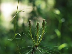 New Growth (bamboosage) Tags: russia m42 preset 1585 helios2