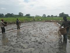 RIMG1083 (WorkingVillages) Tags: congo ruzizi wvi southkivu workingvillages