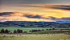 The valley revisited (Kevin_Jeffries) Tags: trees newzealand foothills color colour nature beautiful beauty clouds rural countryside interestingness interesting sheep natural canterbury hills pasture southisland grazing nikonflickraward kevinjeffries landoflandscapesmagazine