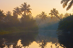 Jungles. Awakening. part 3 (yuriye) Tags: morning light wild india reflection nature silhouette sunrise golden ray indian kerala palm jungle silence rays   alappuzha       yuriye
