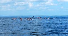 Flamingos. (CatastroF) Tags: africa travel blue praia friendship amizade azzurro viaggi amicizia amistad mozambique inhambane moambique tofo mozambico almosthome viaggiare andare viajosola nossaterragloriosa