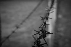 DSC03867 (JTork) Tags: world camp bw white black berlin abandoned germany deutschland wire war sony ww2 alpha barbed duitsland sachsenhausen zw berlijn urbex kampf nex oranienburg a6000