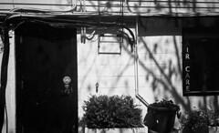 Candace Bonfiglio Photography (candacebonfiglio) Tags: street city light blackandwhite film boston shadows kodak massachusetts unitedstatesofamerica streetphotography ishootfilm kodaktrix pointandshoot beverly bostonma cambridgema bwphotography filmphotography kodaktrix400 everybodystreet staybrokeshootfilm shootfilmstaybroke streetoghs