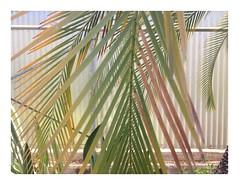 (adele di nunzio) Tags: jungle exotica