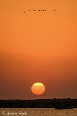 Amanecer Flamenco. (Antonio Puche) Tags: sun seascape sol sunrise landscape nikon flamingo paisaje amanecer marmenor flamenco nikon300mmf4 paisajedemar nikond800 antoniopuche