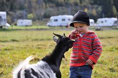 Familien-Ziege-Aletsch-Arena-cp (aletscharena) Tags: schweiz wallis familien unescowelterbe naturpur familienurlaub kinderanimation aletscharena familienwillkommen