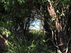 View from camp site to Pretty Beach (spelio) Tags: camping camp coast australia tm nsw 2016