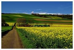 20160424-171134 (lichtschattenjaeger) Tags: yellow landscape gold diesel bio eifel gelb raps biodiesel vulkan getreide gerste weizen benzin hafer biosprit