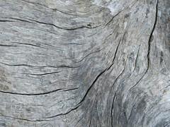 With the Grain (Ramona H) Tags: wood abstract log grain driftwood driftlog