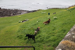 2016 - 26.4.16 Crail (3) (marie137) Tags: road new bridge sea sky beach dogs animals st landscape boats town sand crossing village harbour forth queensferry crail monans geman