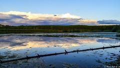 Ultime luci del giorno sul lago di Ragogna (Paolo Gabriele Maiero) Tags: sunset sky panorama lake primavera nature water clouds landscape lago spring tramonto nuvole colours natura cielo acqua colori orizzontale pianteefiori